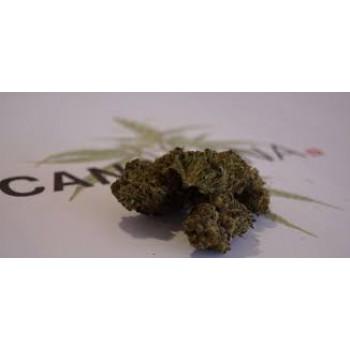 CANASANA haze purpura 1.8g