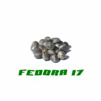 HANFSAMEN FEDORA 17