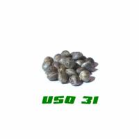 HANFSAMEN USO 31