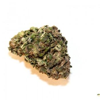 HEMPY GREENHOUSE CHARLOTTE'S WEB 10G