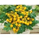 Gelbe Cherrytomate