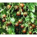 Cherrytomate Black Cherry