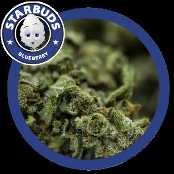 Starbuds Blueberry 2gr