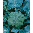 Broccoli Marathon - 50Samen
