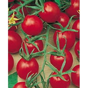 "Cherry-Tomate ""Lylia"" Bio"