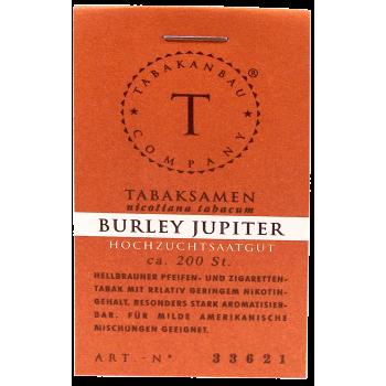 Tabakpflanze - Burley Jupiter 3Stk.