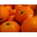 Clementinli - Mandarine (Citrus × aurantium) Jungpflanze